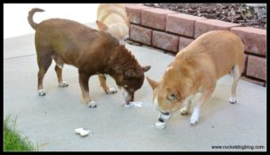 DIY Frozen Dog Treats