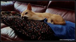 DIY Pocket Dog Bed