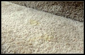 Diy Natural Pet Odor Amp Stain Removal Because Accidents Happen