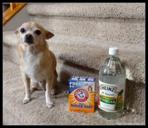 Natural Pet Odor & Stain Removal