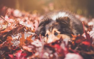 Pup Themed Home Decor For Fall