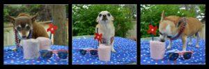 milkshake dog treats