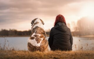 Stress on Dogs and Humans